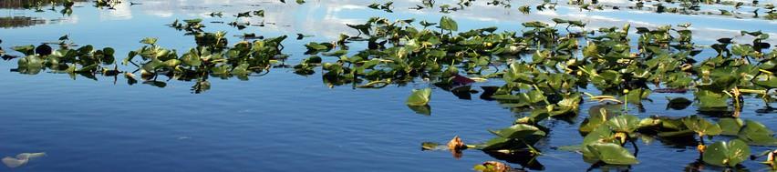 Lake Minnetonka Weeds
